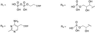 Transketolase - Image: R Groups in Transketolase Mechanism