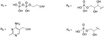 R Groups in Transketolase Mechanism.png