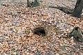 Rabbit burrow hole in Parco Alto Milanese - Legnano, Lombardy, Italy 2020-12-11.jpg