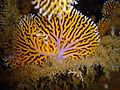 Reef0862 - Flickr - NOAA Photo Library.jpg