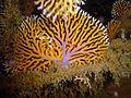 Reef0862 - Flickr - NOAA Photo Library.jpg