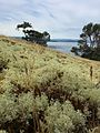 Reindeer Lichen Turn Point (20796708583).jpg