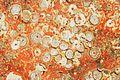 Restes de coquillages et d'algues sur un voile de quille (7).JPG