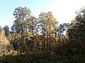 Rezerwat przyrody Dęby w Meszczach 201012.jpg