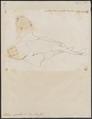 Rhina squatina - 1700-1880 - Print - Iconographia Zoologica - Special Collections University of Amsterdam - UBA01 IZ14100187.tif