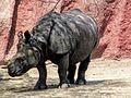 Rhino Hyd.jpg