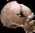 Rhunda Skull.png
