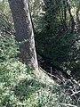 Rida5 Rida River in Vottem Belgium.jpg