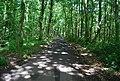 Road through Oldbury Woods - geograph.org.uk - 856734.jpg