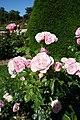 Rose garden @ Parc de Bagatelle @ Paris (28099784670).jpg