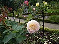 Roses au jardin du thabor a rennes - panoramio (3).jpg