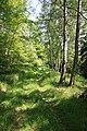 """Süd Harz Wanderung um Sülzhayn Auf dem Kammweg - """"Kleiner Rennsteig"""" ohne Massen von Menschen - panoramio.jpg"""