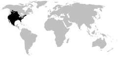 SCAPHIOPODIDAE range.PNG