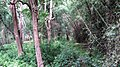 Safari @ Anamalai Tiger Reserve - panoramio (4).jpg