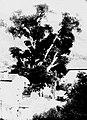 Sahorre - Ormeau en 1898.jpg