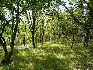 Aquitaine - Landscape in Dordogne, Aquitaine