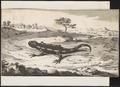 Salamandra maculosa - 1700-1880 - Print - Iconographia Zoologica - Special Collections University of Amsterdam - UBA01 IZ11400087.tif