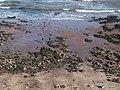 Saltern Cove - geograph.org.uk - 1032696.jpg