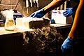 Samples in dry ice. Institute of Systematics and Evolution of Animals Polish Academy of Sciences in Cracov.jpg