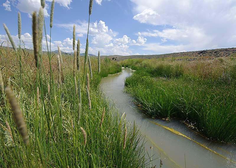 Fișier:Sand creek wet meadow restoration modoc co ca.jpg