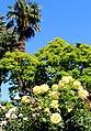 Santa Clara, CA USA - Santa Clara University, Mission Santa Clara de Asis - panoramio (30).jpg