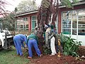 Saving a very valuable cycad prior to building extensions to the Library at the KZN Department of Agriculture 5.jpg