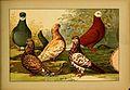 Schachtzabel 1906 Tafel 98.jpg