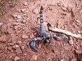 Scorpion (6).jpg