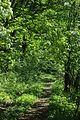 Sedlec, Skalky u Třebutiček, les.jpg