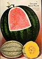 Seed annual 1909 (1909) (14785358493).jpg