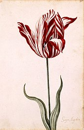 Image result for tulip mania