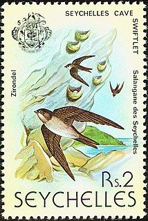 Seychelles swiftlet Species of bird