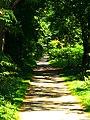 Shady Path - panoramio.jpg