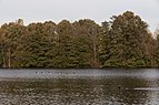 Sharon Woods-Schrock Lake in Fall 2.jpg