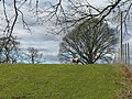 Sheep and trees at Blackburn - geograph.org.uk - 729532.jpg