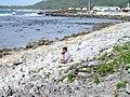 Shore protection, Rarotonga Island, Cook Islands.jpg