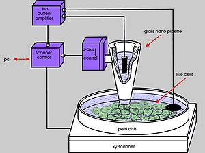 Scanning ion-conductance microscopy - Scanning ion-conductance microscopy diagram.