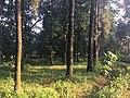 Silence of Nature 01.jpg
