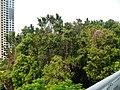 Singapore Southern Ridges Hilltop Walk 12.jpg