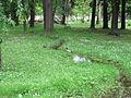 Sliki Skopje Park Vo Maj (186).JPG