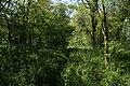 Small wood near Manthorpe - geograph.org.uk - 420107.jpg