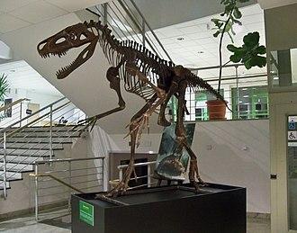 Smok (archosaur) - Reconstructed skeleton, University of Warsaw