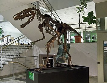 Reconstructed skeleton of Smok wawelski at the University of Warsaw.