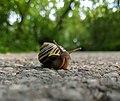 Snail - 20190619 (cropped).jpg