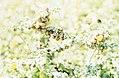 Snails on thistle. Near Tarifa. Spain. April 1975 (37086521983).jpg