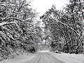 Snowy (2).JPG