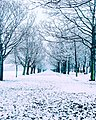 Snowy Days (139819741).jpeg