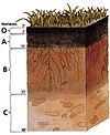 Soil profile.jpg