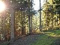 Sommerlicher Herbst Herrenstuhl - panoramio (4).jpg