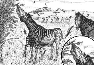 Hippidion - Restoration of Pleistocene South America